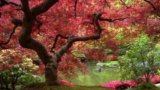 Yoga para el deporte: Rutina de yoga para triatletas