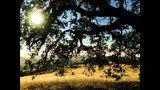 Acerca de la naturaleza - Alan Watts