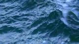 Krillium Plus Enriquecido, vídeo oficial